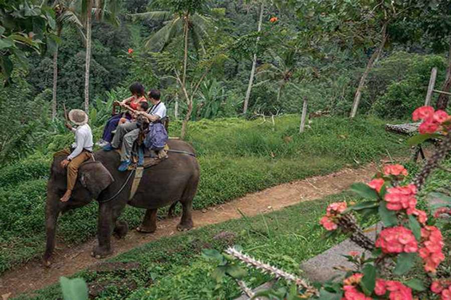 elephant trekking, bali elephant camp