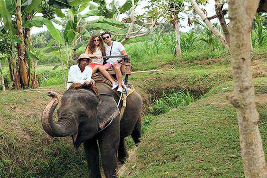 elephant trekking, ayung river track