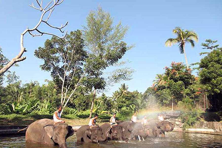 elephant wading pool, bali elephant camp