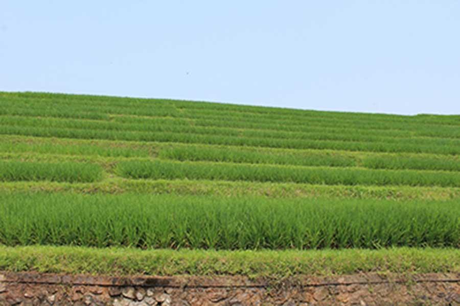 luwus village, rice field, bali moon bike