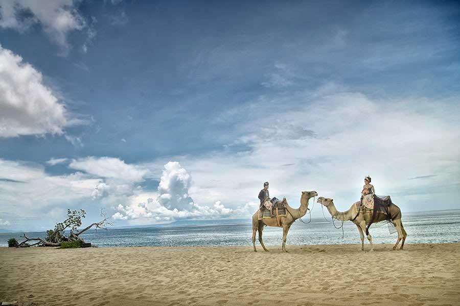 hilton beach, camel photo wedding