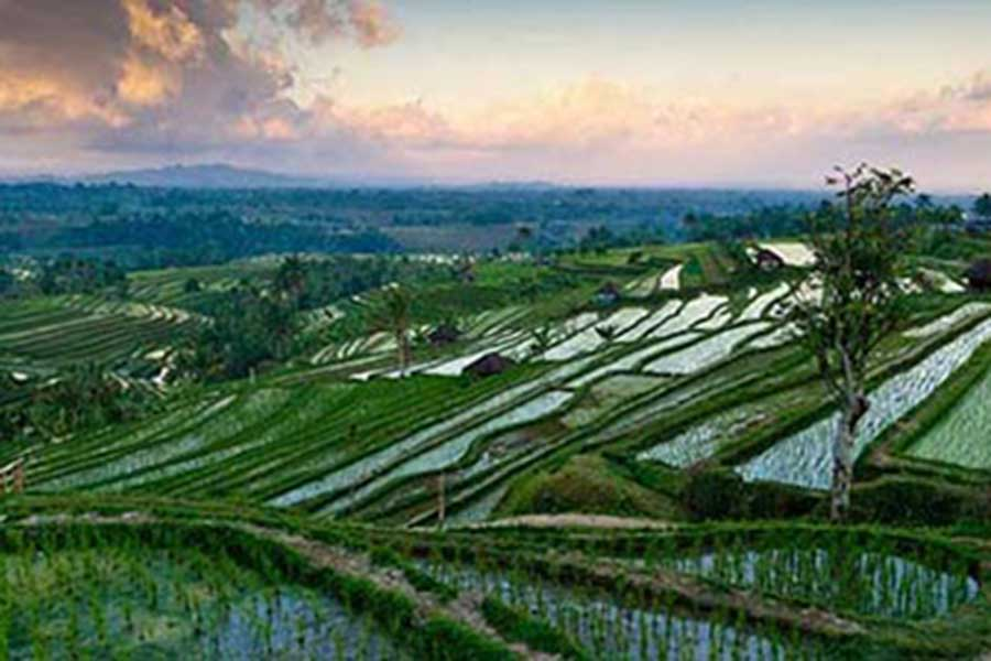 vacation package bali, bali tour package, jatiluwih