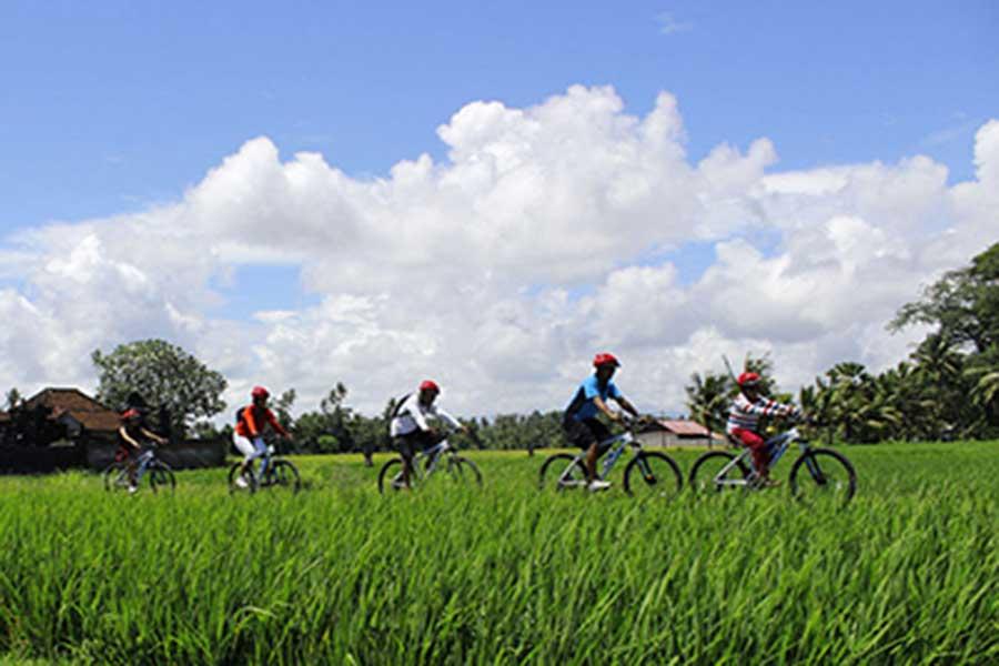 jatiluwih cycling tour