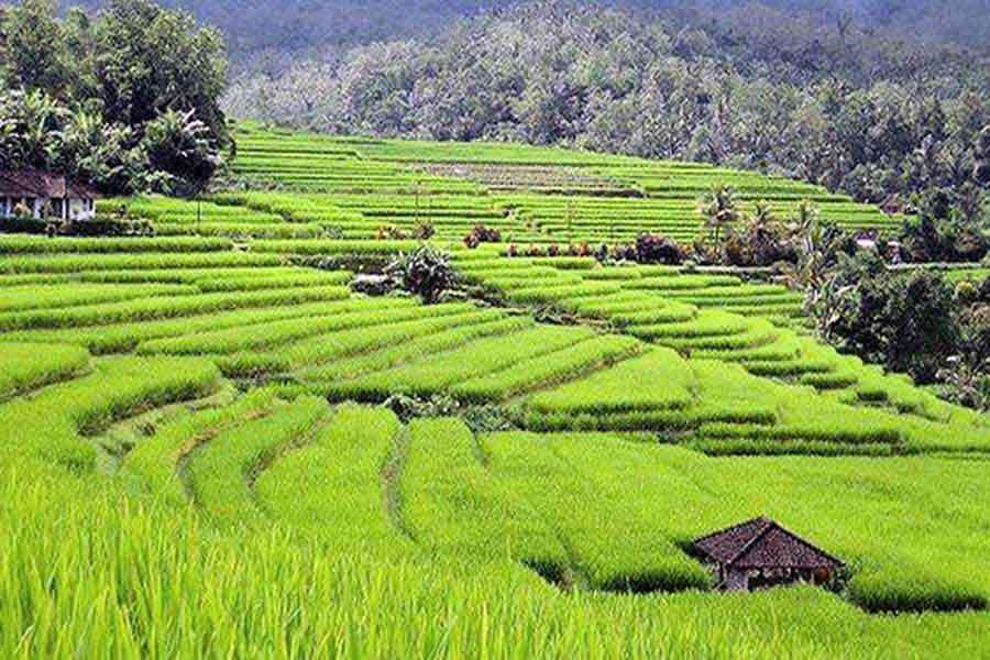 jatiluwih rice terrace, bali world heritage site