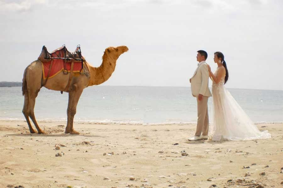 photo wedding with camel at kelan beach