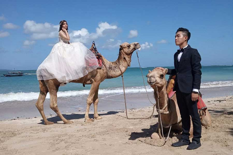 kelan beach, camel photo wedding