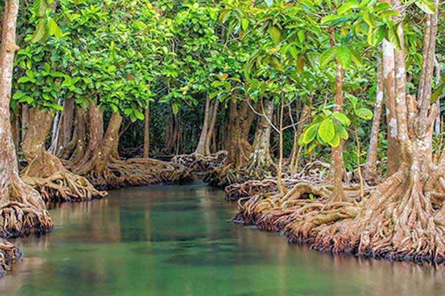 mangrove forest lembongan