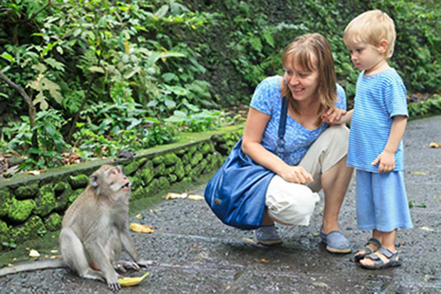 monkey forest temple, sightseeing bali, honeymoon package