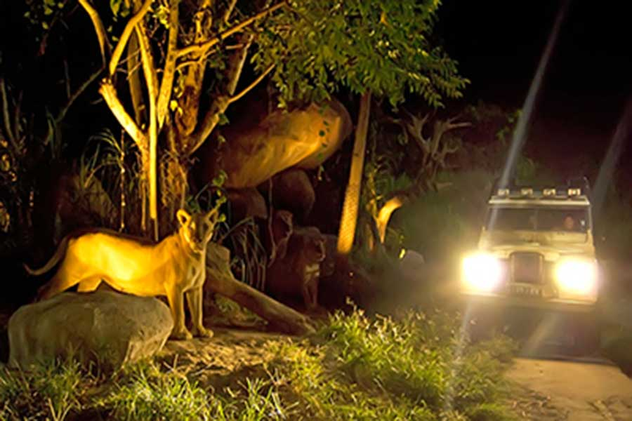 night safari, bali safari and marine park