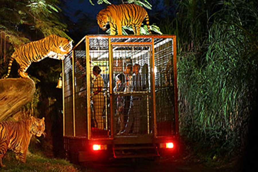 night safari journey, bali safari and marine park