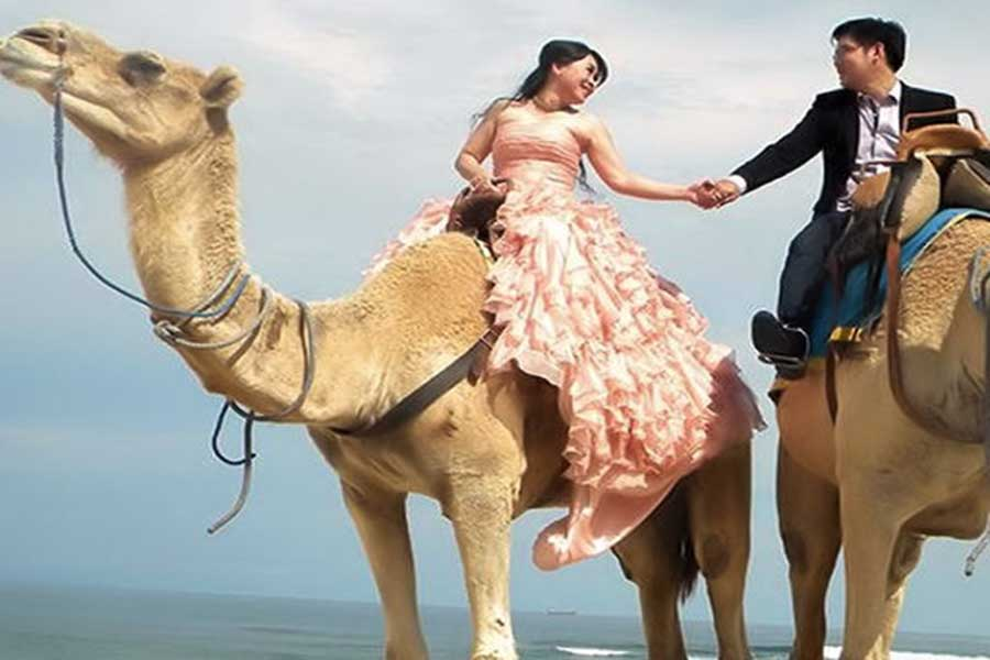 photo wedding with camel at hilton bali resort