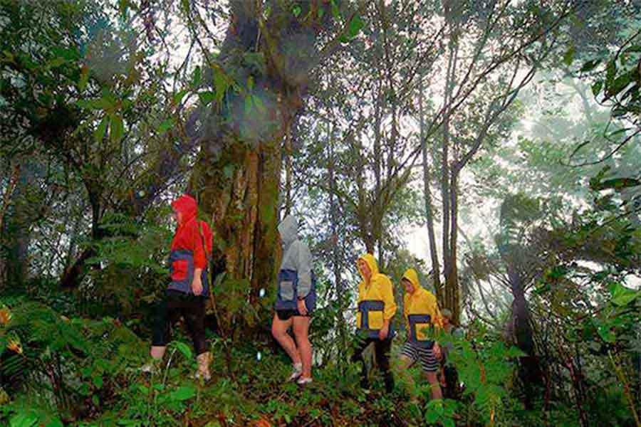 rain forest, trekking, bedugul bali