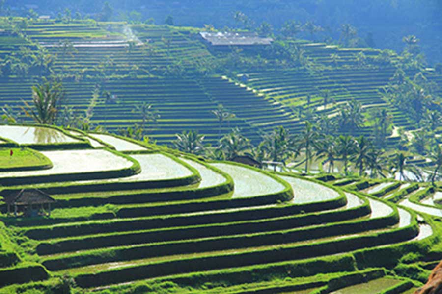 jatiluwih rice terraces, tegallalang rice terraces, honeymoon package bali