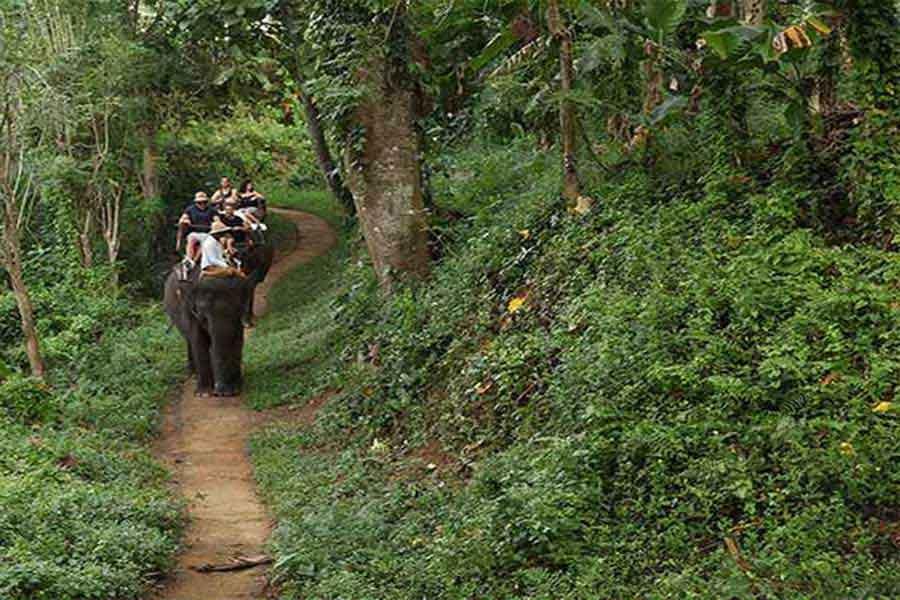 ride elephant, bali elephant trekking