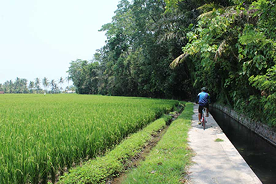 rice field view, luwus village, bali moon bike