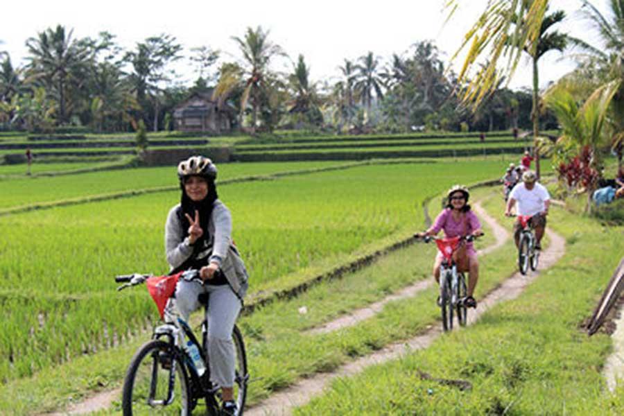 ubud village, rice paddy, bike tour