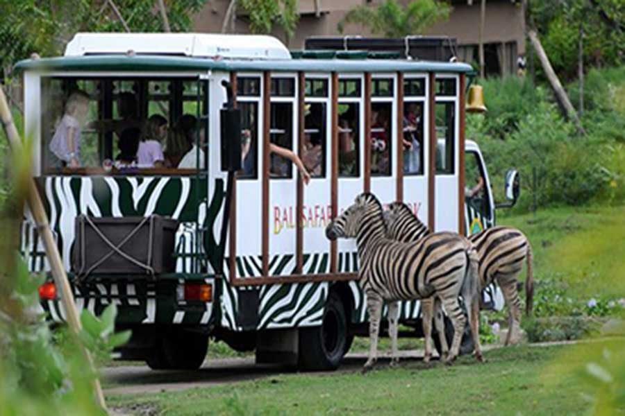 safari journey, dragon package, bali safari