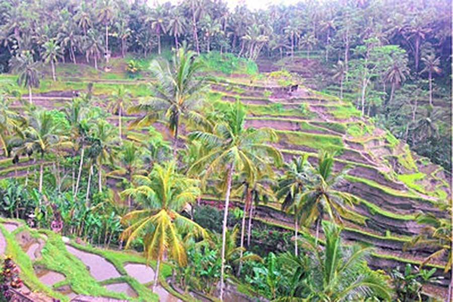 rice terrace, tegallalang, ubud bikes tour
