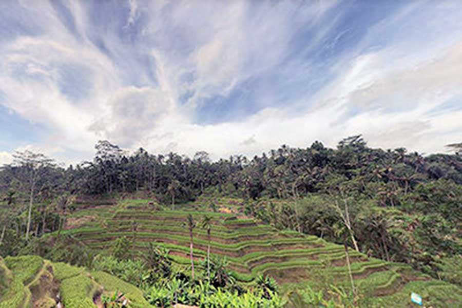 tegallalang rice terrace, bali tour