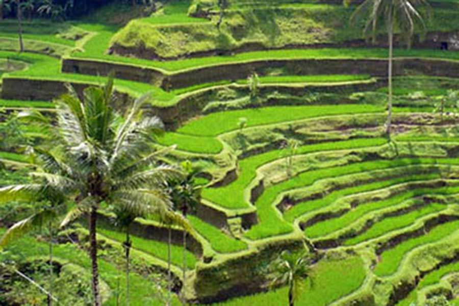 bali vacation package, bali tour, tegalalang rice terrace