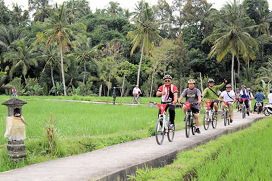 rice field, ubud village, bikes tour