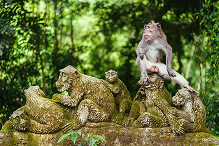 ubud monkey forest, honeymoon package bali, ubud tour