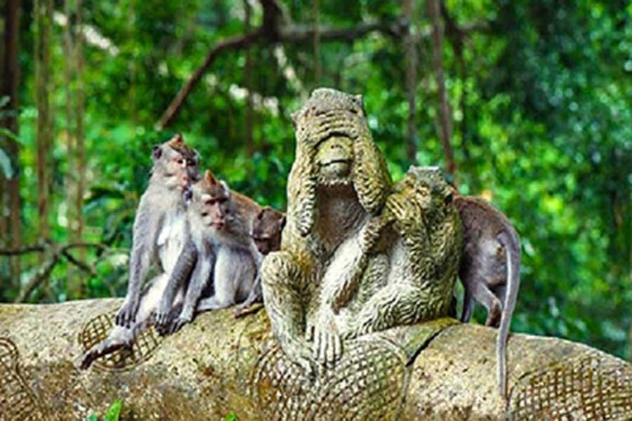 honeymoon package bali, ubud monkey forest, ubud tour