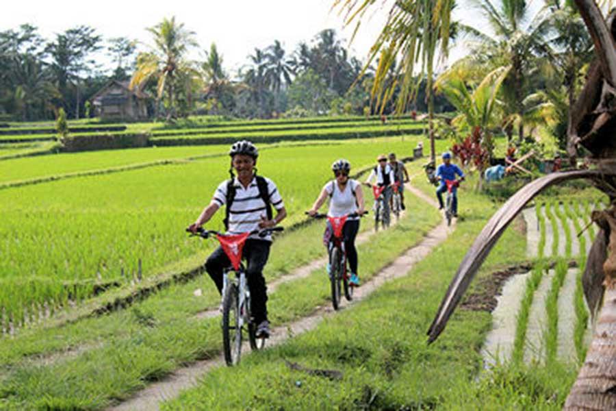ubud village, rice field, bali cycling tour